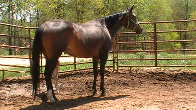Invitations hotrodder aqha bay mare by extended invitation and out of the great superior wp mare this buds hot by zippo bud bar the maternal side of this gal is very strong stopboris Gallery